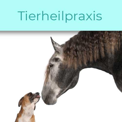 Tierheilpraxis-muenchen-tierheilpraxis-landsberg-tierheilpraxis-buchloe