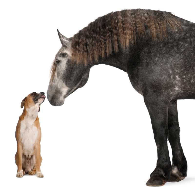 mobile-tierheilpraxis-fuer-hunde-mobile-tierheilpraxis-pferde-tierheilpraktikerin-hunde-tierheilpraktikerin-pferde-tierheilpraktiker-hunde-tierheilpraktiker-pferde
