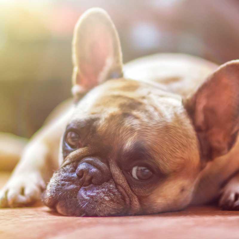 fuetterungsberatung-hund-futterberatung-hund-beratung-hundefutter-richtiges-hundefutter