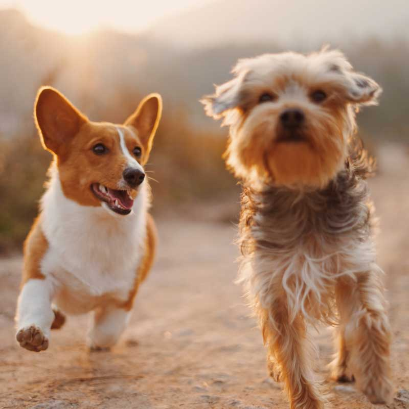 gesundheitscheck-hund-mineralienanalyse-hund-mineralisierungsanalyse-hund-haaranalyse-giftstoffe-hund-starnberg-muenchen-augsburg-landsberg-fuerstenfeldbruck
