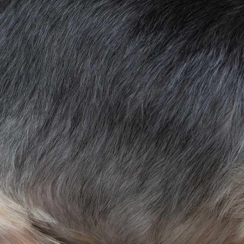 haaranalyse-hund-giftstoffe-haaranalyse-mineralien-haaranalyse-hund-mineralstoffmangel-analyse-hunde