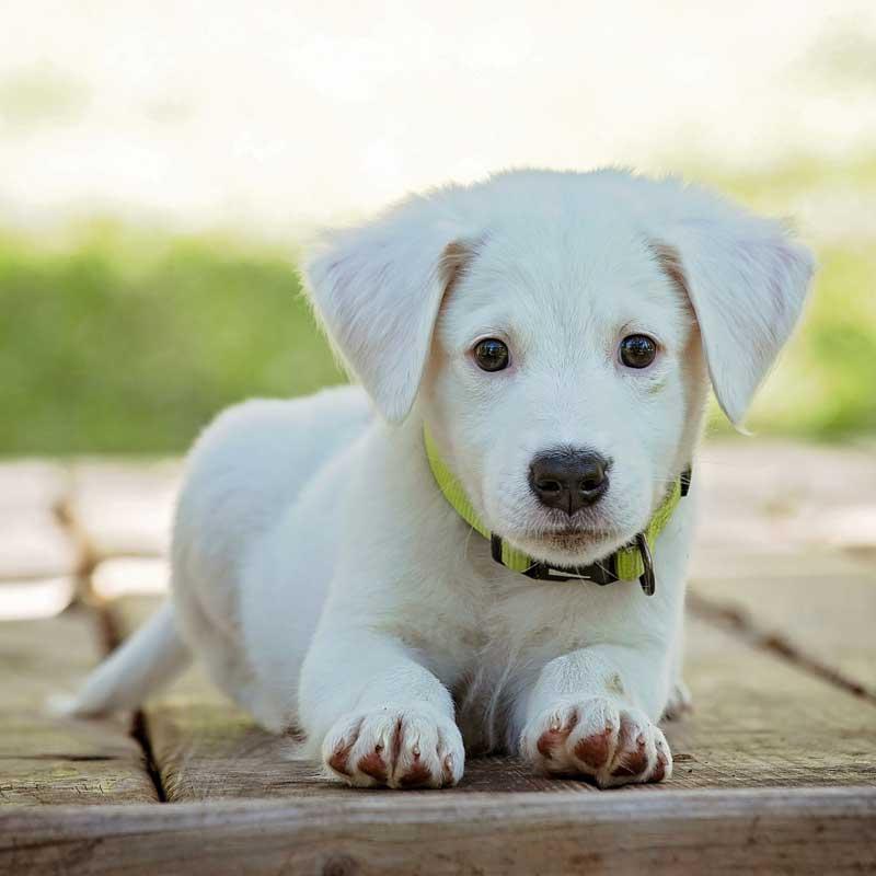 hund-richtig-fuettern-beratung-tierernaehrungsberaterin-hunde-richtig-fuettern-was-darf-mein-hund-fressen