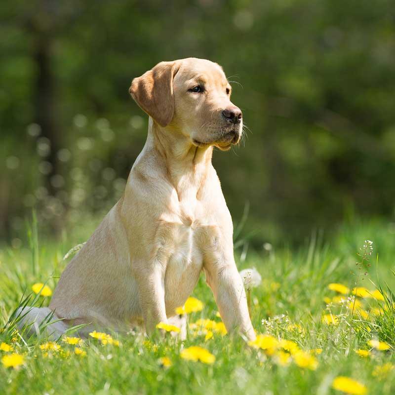 hundeernaehrungsberatung-ernaehrungsberatung-hunde-hund-muenchen-starnberg-landsberg-augburg-mindelheim-buchloe-fuerstenfeldbruck
