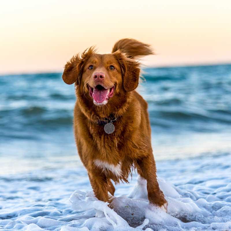 krankheiten-hund-durch-ernaehrungsumstellung-heilen-muenchen-starnberg-augsburg-landsberg-fuerstenfeldbruck-hundeernaehrung-hundeernaehrungsberatung-hundefuetterungsberatung