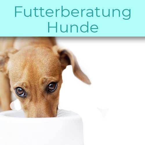 Fuetterungsberatung-hund-futterberatung-hund-ernaehrungsberatung-hund-was-darf-mein-hund-fressen