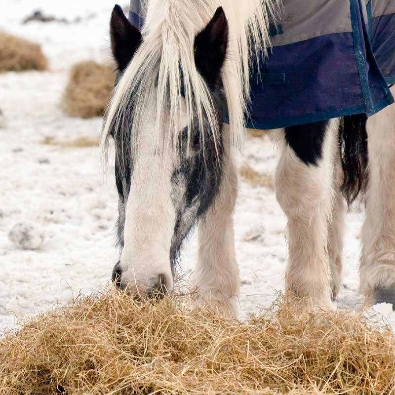Heufuetterung-Pferd-wieviel-heu-braucht-mein-Pferd-Heufuetterung-winter-heufuetterung-sommer-Pferd-heu-Pferd-wieviel-heu-berechnen-heumenge-Pferd-berechnen