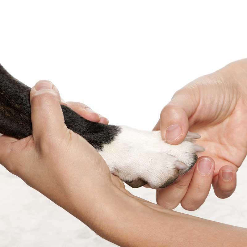tellington-ttouch-hund-tellington-ttouch-hunde-tellington-ttouch-hunde-kurs-tellington-ttouch-hund-trainer-tellington-ttouch-hund-trainerin-tellington-ttouch-hund-erfahrungen